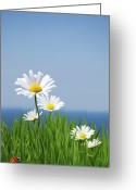 Blue Green Water Greeting Cards - Daisies On A Cliff Edge Greeting Card by Andrew Dernie