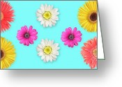 Lynnette Johns Greeting Cards - Daisies on Blue Greeting Card by Lynnette Johns
