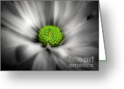 Garden Decoration Mixed Media Greeting Cards - Daisy Black and White Greeting Card by Ms Judi
