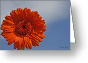 Orange Daisy Photo Greeting Cards - Daisy Days Greeting Card by Georgia Fowler