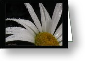 Warm Looking Flower Greeting Cards - Daisy Drops Greeting Card by Debra     Vatalaro