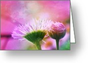 Morning Mist Images Greeting Cards - Daisy Fleabanes Greeting Card by Judi Bagwell