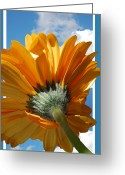 Orange Daisy Photo Greeting Cards - Daisy in the Sky Greeting Card by Rozalia Toth