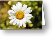 Bellis Greeting Cards - Daisy on Canvas Greeting Card by George Oze