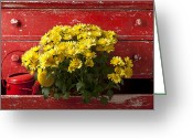 Wooden Greeting Cards - Daisy Plant In Drawers Greeting Card by Garry Gay