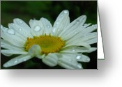 White Daisies Greeting Cards - Daisy Portrait Greeting Card by Juergen Roth