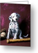 Mitt Greeting Cards - Dalmatian puppy with baseball Greeting Card by Garry Gay