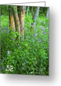 Dames Greeting Cards - Dames Rocket in the Forest Greeting Card by Gordon Wood