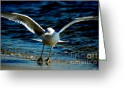 Seabirds Greeting Cards - Dance Move Greeting Card by David Weeks