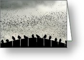 Flock Greeting Cards - Dance of the Migration Greeting Card by Jan Piller