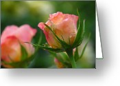 2012 Flower Calendar Greeting Cards - Dance Your Bud Off Greeting Card by Juergen Roth