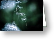 Pflanzen Greeting Cards - Dancing Dandelion Greeting Card by Gabi Fischer