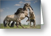 Caballo Greeting Cards - Dancing Horses Greeting Card by Henri Ton