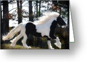 Stallion Greeting Cards - Dancing in the Light Greeting Card by Terry Kirkland Cook