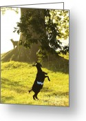Morning Light Greeting Cards - Dancing in the Rain Greeting Card by Thomas R Fletcher