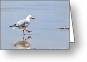 Sea Bird Greeting Cards - Dancing in time with my Reflection Greeting Card by Kaye Menner