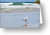 Sea Bird Greeting Cards - Dancing on the Beach Greeting Card by Kaye Menner