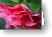 Plants Greeting Cards - Dancing Petals of the Camellia Greeting Card by Enzie Shahmiri