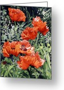 Barbara Painting Greeting Cards - Dancing Poppies Greeting Card by Barbara Jewell