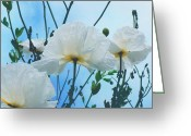 Fine Art Flower Photography Greeting Cards - Dancing Poppies Greeting Card by Irina Wardas