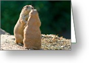 Upright Greeting Cards - Dancing Prairie dogs Greeting Card by Gert Lavsen