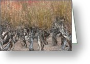 Barks Greeting Cards - Dancing trees Greeting Card by Hitendra Sinkar