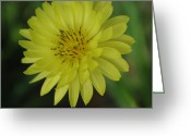 Robyn Stacey Photo Greeting Cards - Dandelion - Texas Style Greeting Card by Robyn Stacey