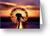 Lincoln Field Greeting Cards - Dandelion at Sundown Greeting Card by Karen M Scovill