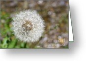 Dandelion Pyrography Greeting Cards - Dandelion Greeting Card by Melania Sherdenkovska