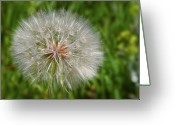 Seed Greeting Cards - Dandelion Puff - The Summer Queen Greeting Card by Christine Till