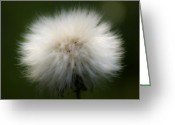Exotic Flora Greeting Cards - Dandelion Greeting Card by Svetlana Sewell