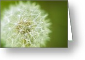 Depth Of Field Greeting Cards - Dandy Greeting Card by Scott Norris