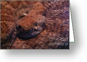 Snake Scales Greeting Cards - Dangerously Handsome Greeting Card by Linda Knorr Shafer
