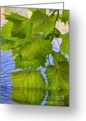 Flooding Photo Greeting Cards - Dangling Leaves Greeting Card by Deborah Benoit