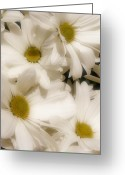 Frizzell Greeting Cards - Danielles Daisies Greeting Card by Michelle Frizzell-Thompson
