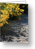 Garden Pathway Greeting Cards - Dappled Light Greeting Card by Suzanne Gaff