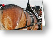 Carriage Team Greeting Cards - Dappled Greeting Card by Lynda Dawson-Youngclaus