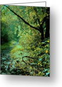 Seasonal Greeting Cards Greeting Cards - Dappled Path I Greeting Card by Steven Ainsworth