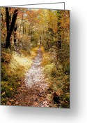 Nature Photograph Greeting Cards - Dappled Path II Greeting Card by Steven Ainsworth