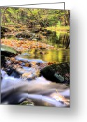 Brooks Greeting Cards - Dappled Two Greeting Card by JC Findley