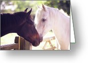 Two Animals Greeting Cards - Dark Bay And Gray Horse Sniffing Each Other Greeting Card by Sasha Bell