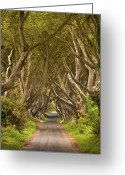 Landscape Framed Print Greeting Cards - Dark Hedges Greeting Card by Pawel Klarecki