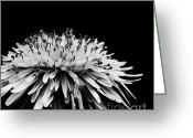 Black And White Floral Greeting Cards - Dark Greeting Card by Kristin Kreet