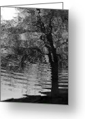 Blacks Greeting Cards - Dark Vision Greeting Card by Steven Milner