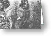 Playful Wolves Greeting Cards - Darkside Wolf Greeting Card by Debra     Vatalaro