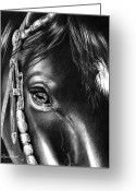 Western Pencil Drawings Greeting Cards - DArtagnans Soul Greeting Card by Jill Westbrook