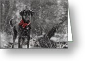 Dogs Digital Art Greeting Cards - Dashing Through the Snow Greeting Card by Lori Deiter