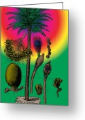 Formal Mixed Media Greeting Cards - Date Palm Greeting Card by Eric Edelman