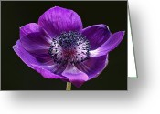 Flower Over Black Photo Greeting Cards - Daughter of the Wind Greeting Card by Juergen Roth