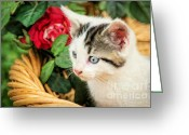 Playful Kitten Greeting Cards - Day Dreaming Greeting Card by Darren Fisher